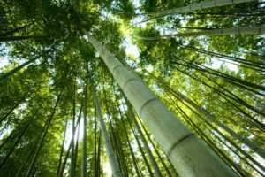 Bamboo Forest - Naturopathic Services