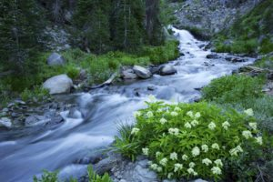 Picture of stream - naturopathic resources